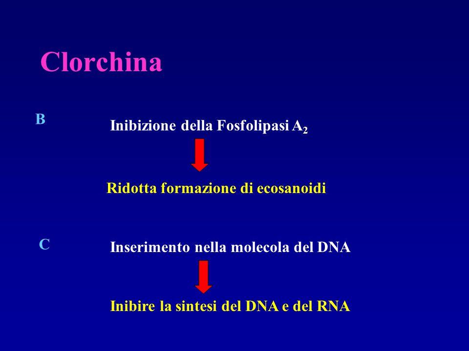 Clorchina B Inibizione della Fosfolipasi A2