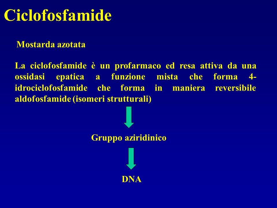 Ciclofosfamide Mostarda azotata