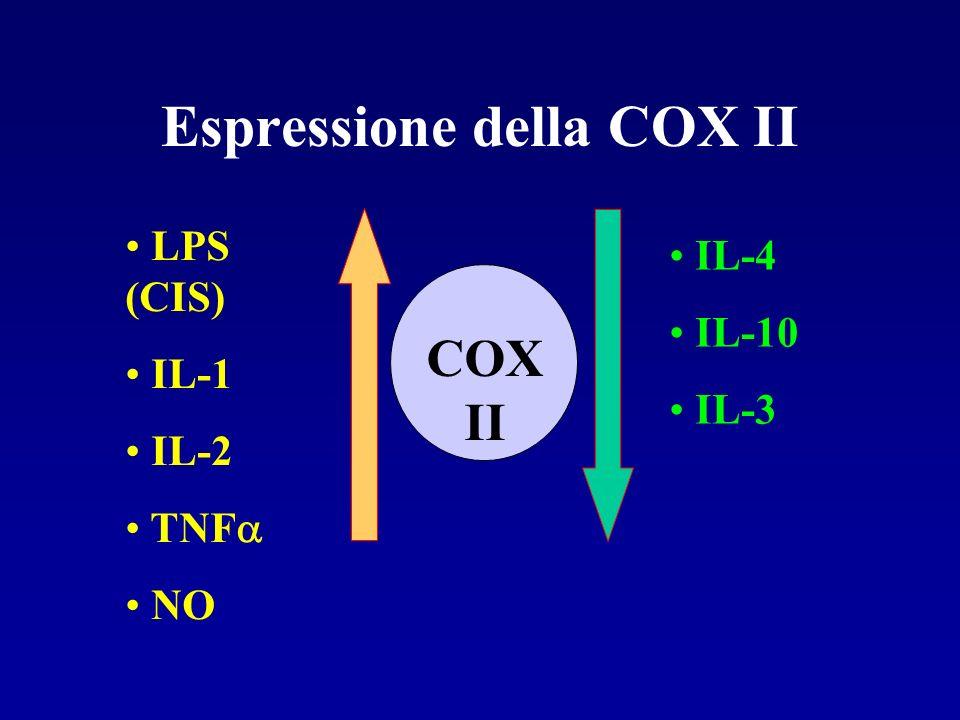 Espressione della COX II