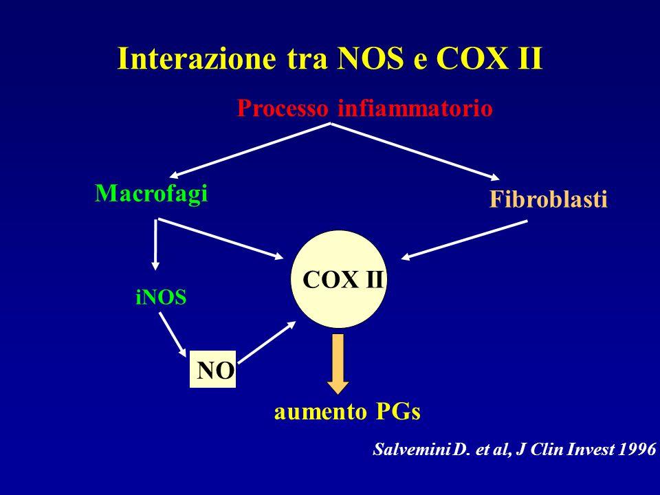 Interazione tra NOS e COX II