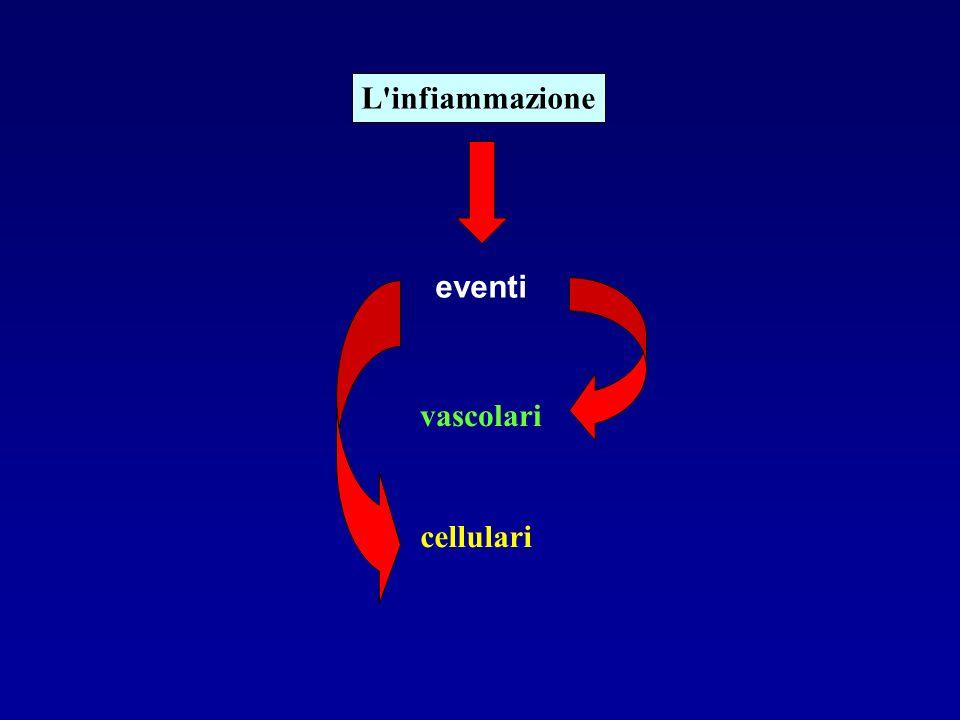 L infiammazione eventi vascolari cellulari
