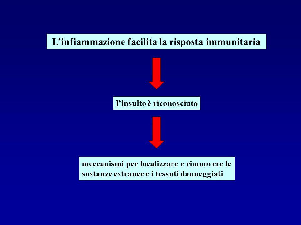 L'infiammazione facilita la risposta immunitaria