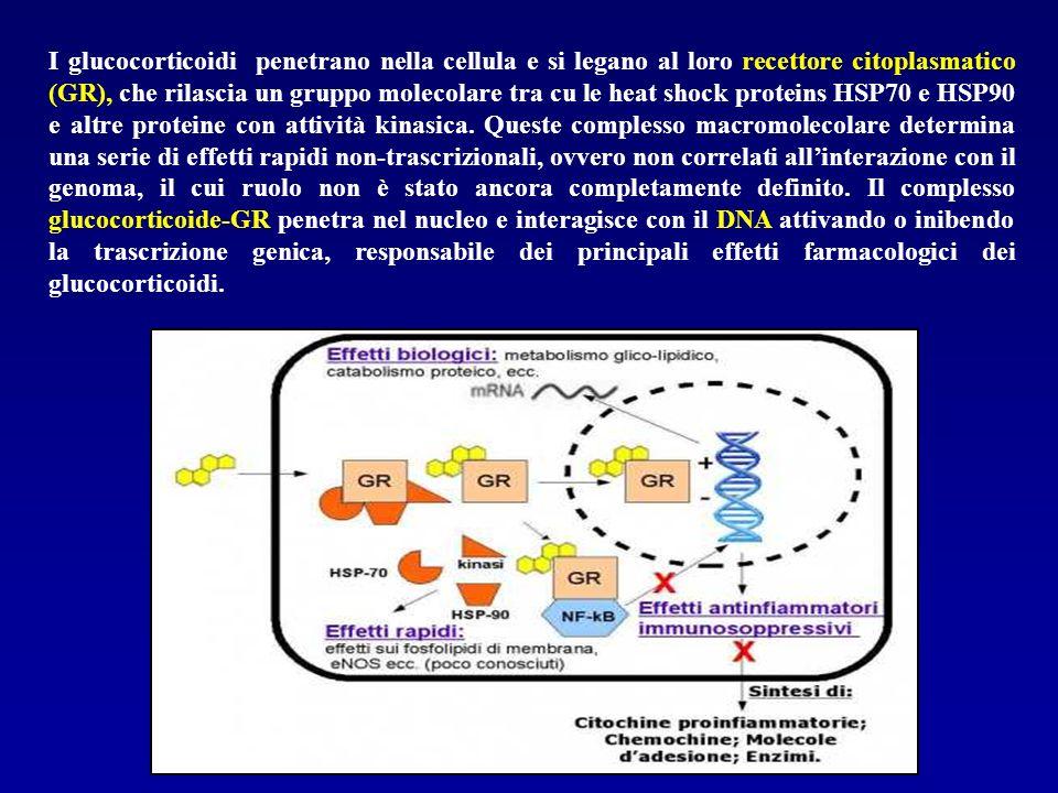 I glucocorticoidi penetrano nella cellula e si legano al loro recettore citoplasmatico (GR), che rilascia un gruppo molecolare tra cu le heat shock proteins HSP70 e HSP90 e altre proteine con attività kinasica.