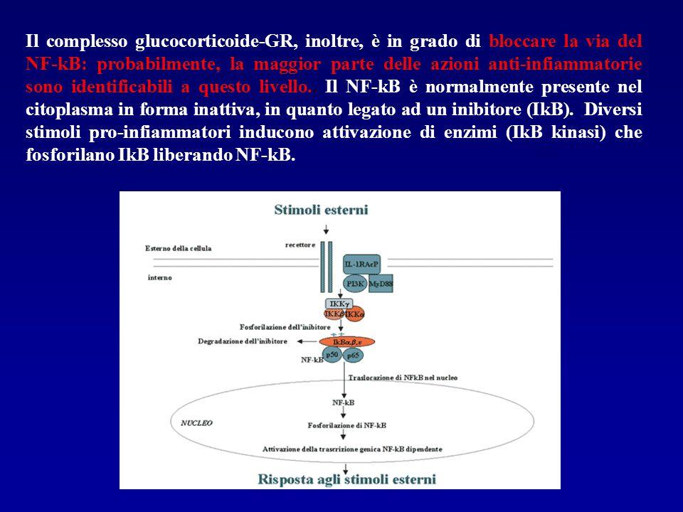 Il complesso glucocorticoide-GR, inoltre, è in grado di bloccare la via del NF-kB: probabilmente, la maggior parte delle azioni anti-infiammatorie sono identificabili a questo livello..