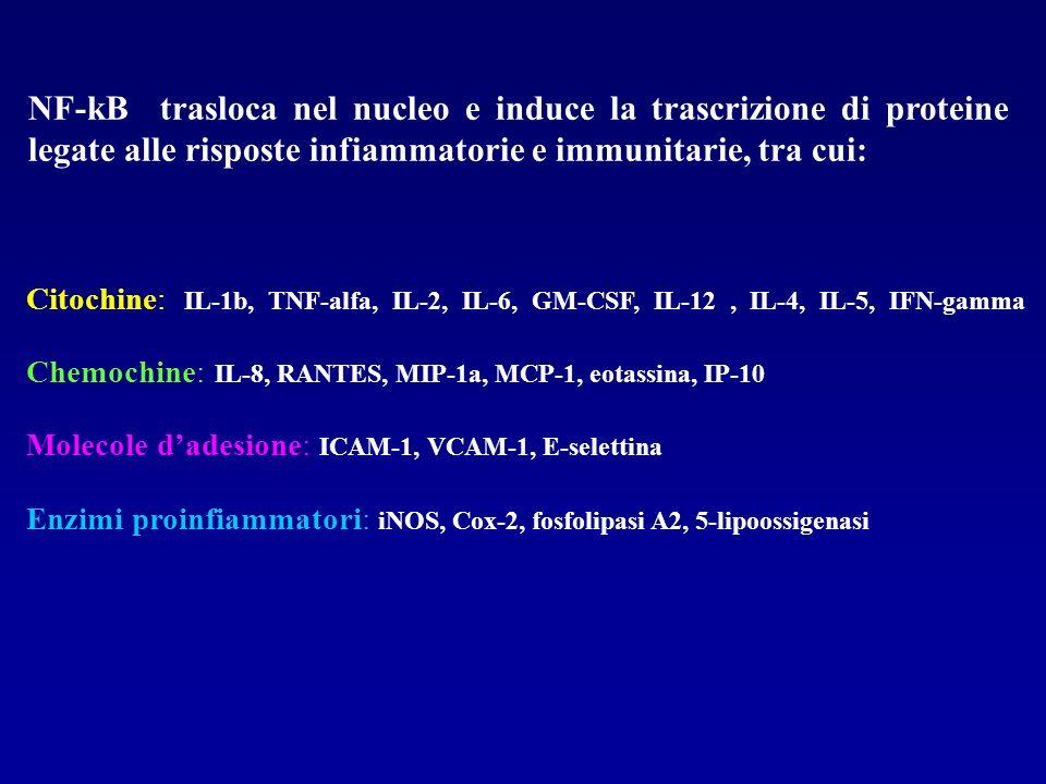 NF-kB trasloca nel nucleo e induce la trascrizione di proteine legate alle risposte infiammatorie e immunitarie, tra cui: