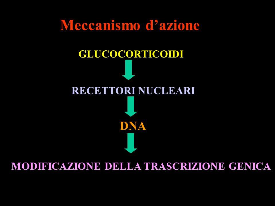 Meccanismo d'azione DNA GLUCOCORTICOIDI RECETTORI NUCLEARI