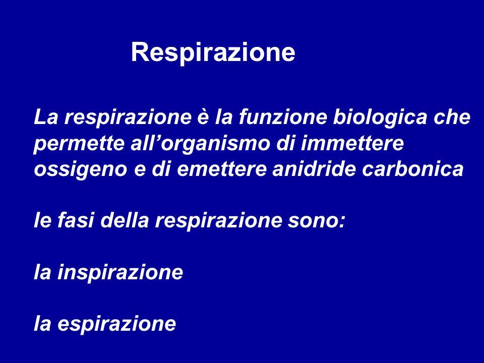 Respirazione La respirazione è la funzione biologica che