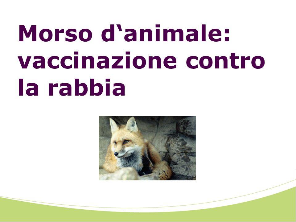 Morso d'animale: vaccinazione contro la rabbia