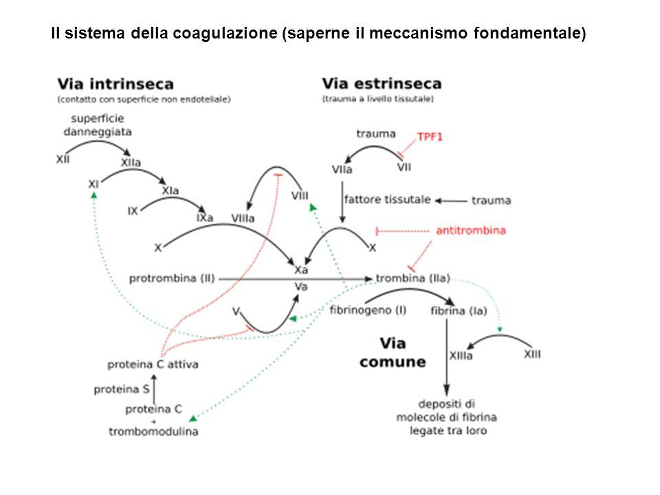 Il sistema della coagulazione (saperne il meccanismo fondamentale)