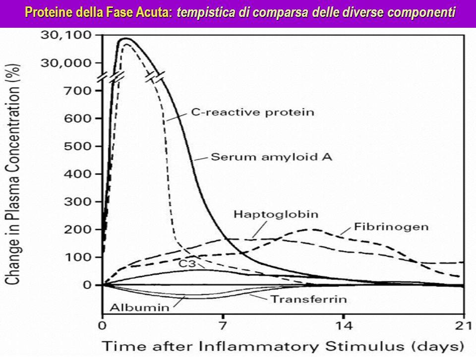 Proteine della Fase Acuta: tempistica di comparsa delle diverse componenti