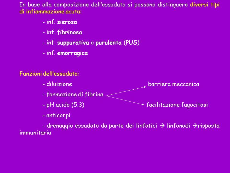 In base alla composizione dell'essudato si possono distinguere diversi tipi di infiammazione acuta: