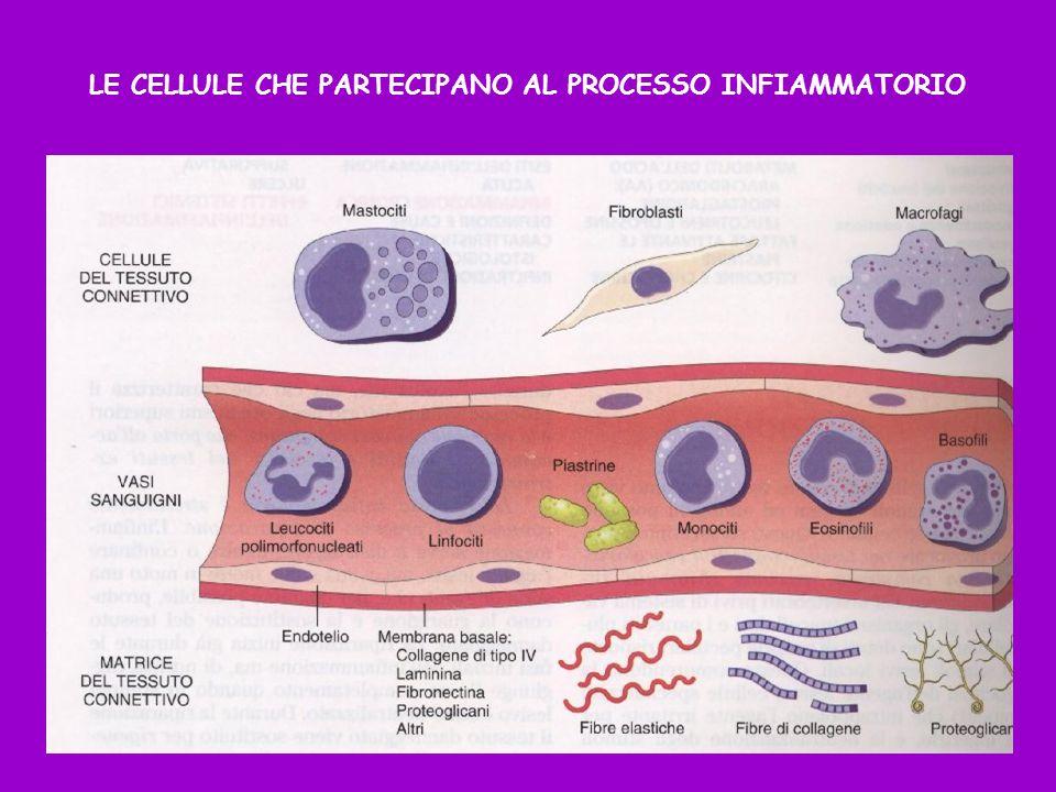 LE CELLULE CHE PARTECIPANO AL PROCESSO INFIAMMATORIO