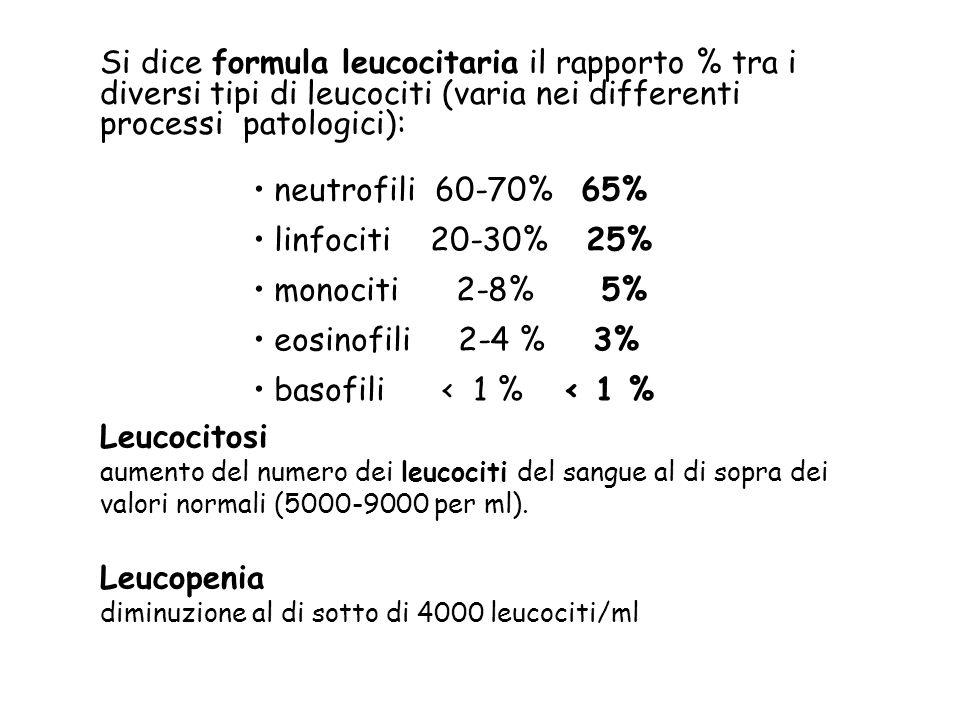 Si dice formula leucocitaria il rapporto % tra i diversi tipi di leucociti (varia nei differenti processi patologici):