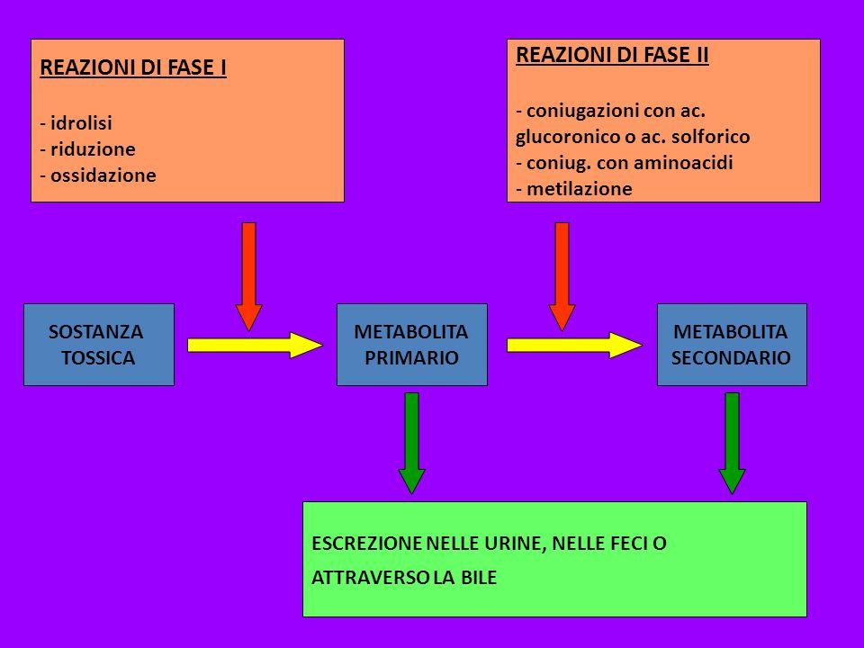REAZIONI DI FASE II REAZIONI DI FASE I idrolisi riduzione ossidazione