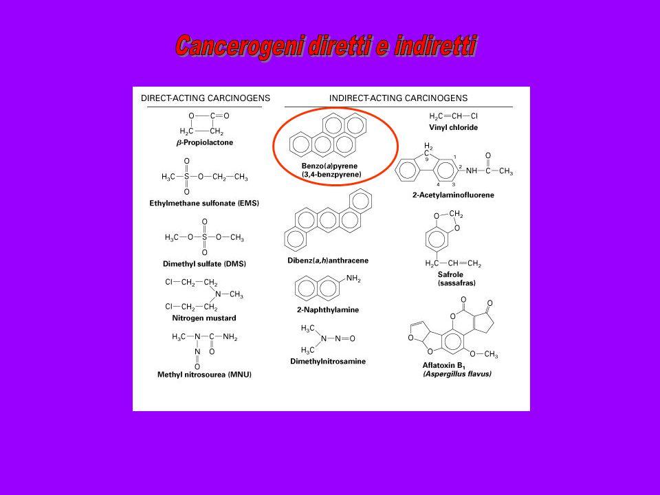 Cancerogeni diretti e indiretti