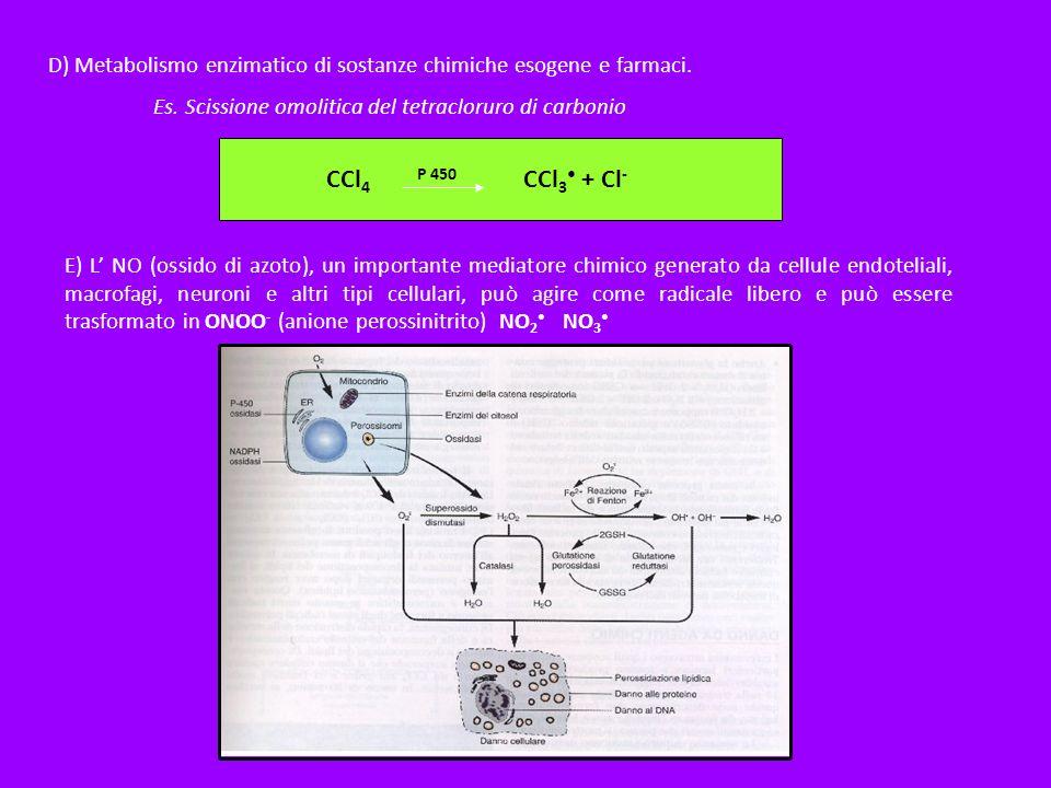 D) Metabolismo enzimatico di sostanze chimiche esogene e farmaci.