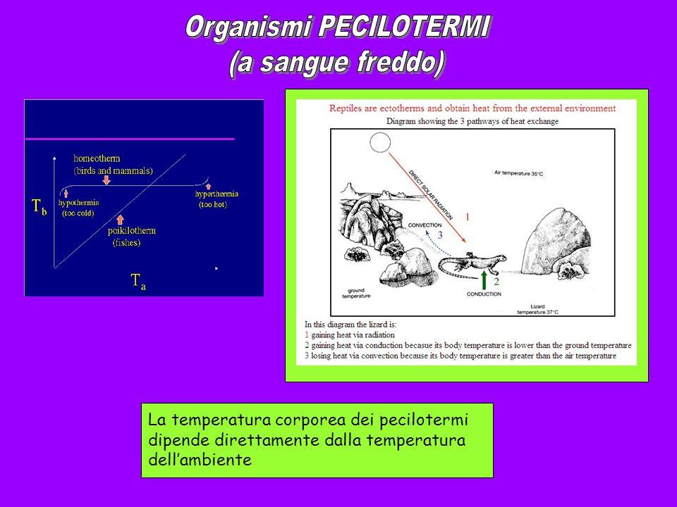 Organismi PECILOTERMI