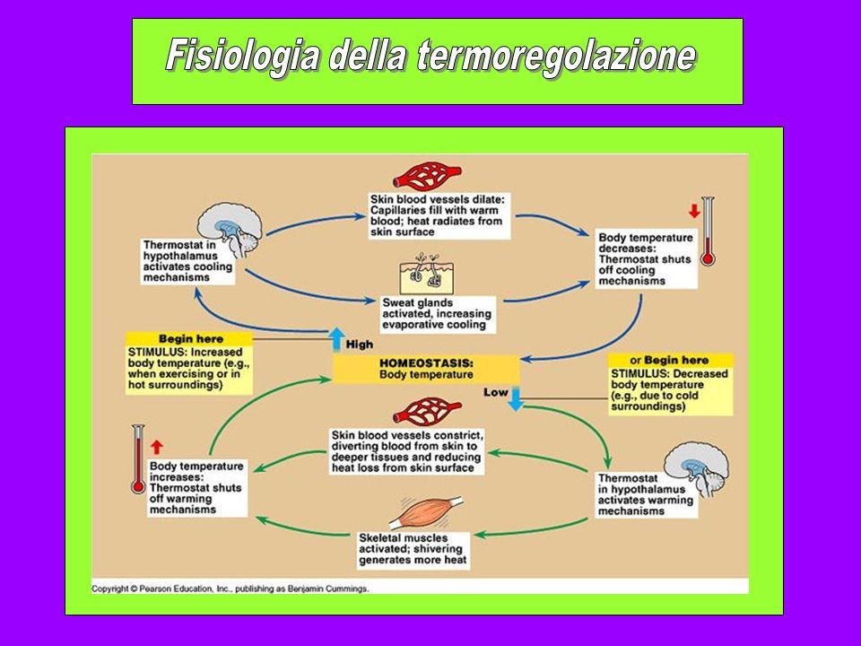 Fisiologia della termoregolazione
