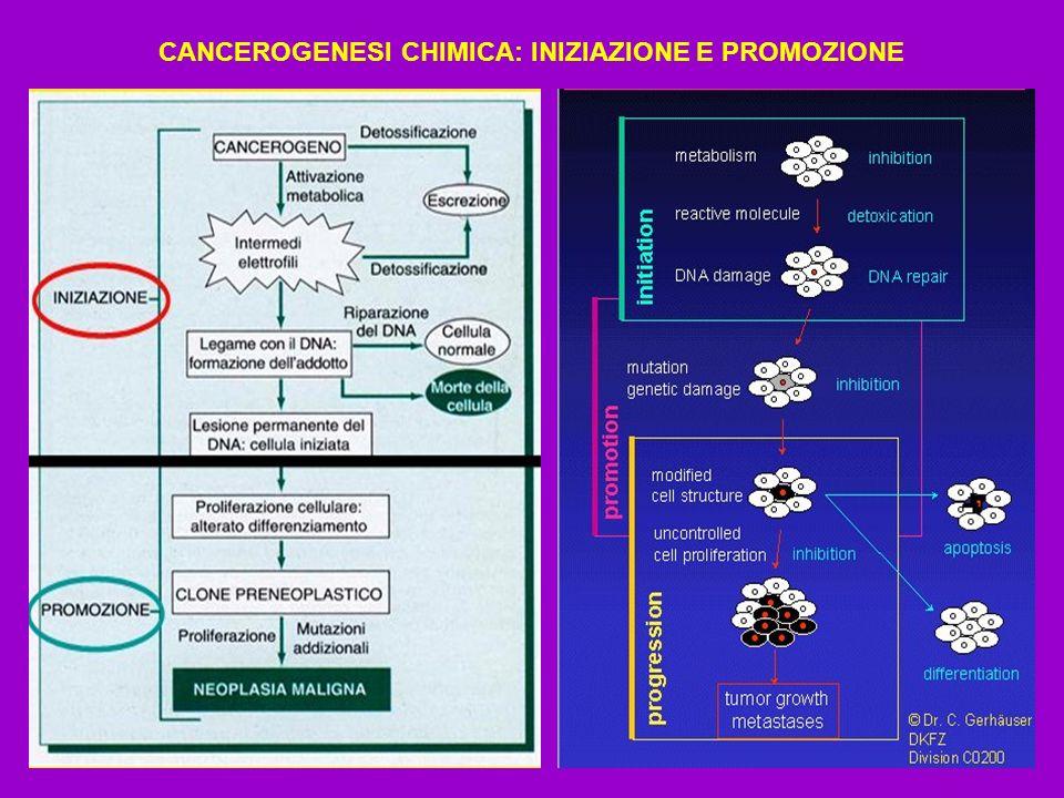 CANCEROGENESI CHIMICA: INIZIAZIONE E PROMOZIONE