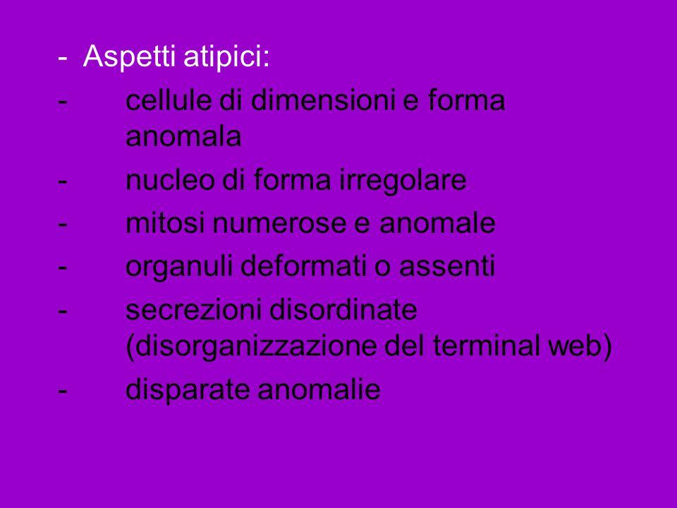 Aspetti atipici: cellule di dimensioni e forma anomala. nucleo di forma irregolare. mitosi numerose e anomale.