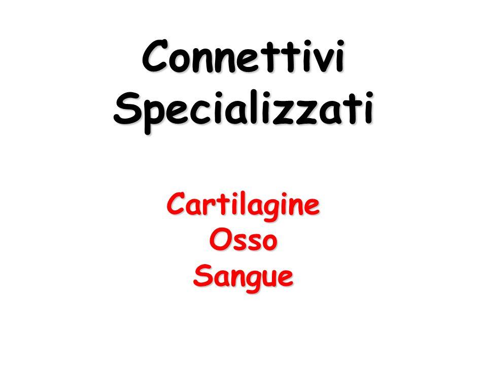 Connettivi Specializzati
