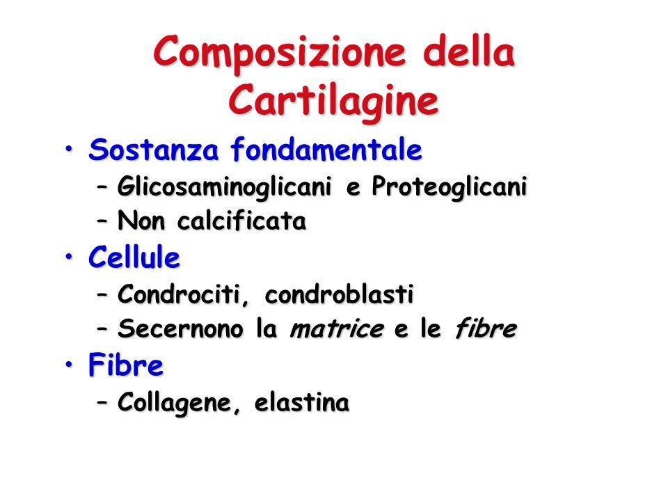 Composizione della Cartilagine