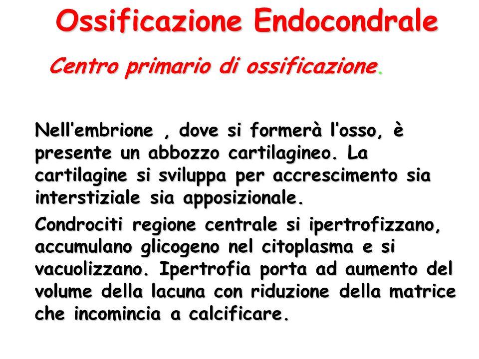 Ossificazione Endocondrale
