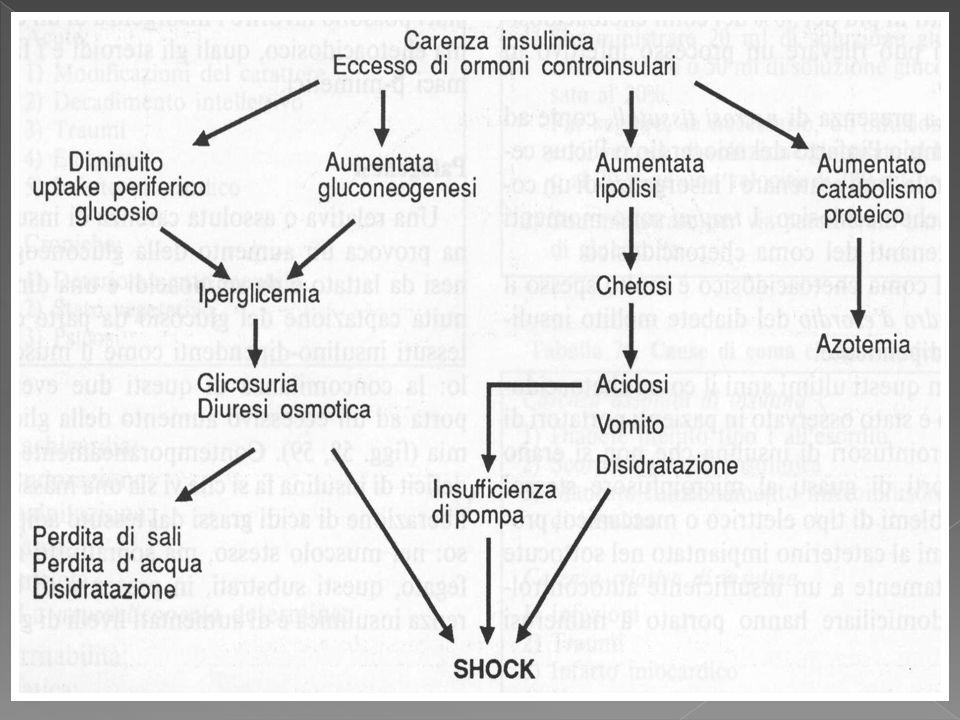 Rappresenta la risposta dell´organismo al digiuno cellulare determinato da una carenza relativa/assoluta di insulina (ormone anabolico) e dall´ipersecrezione di ormoni controregolatori (glucagone, catecolamine, GH).