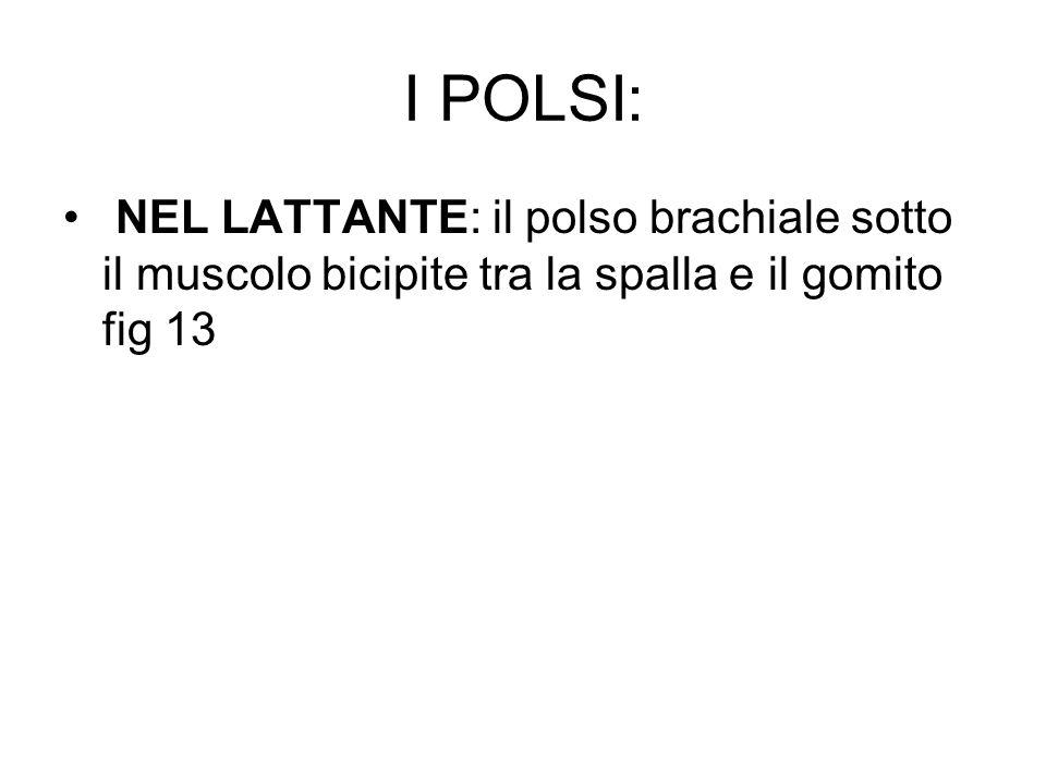 I POLSI: NEL LATTANTE: il polso brachiale sotto il muscolo bicipite tra la spalla e il gomito fig 13.