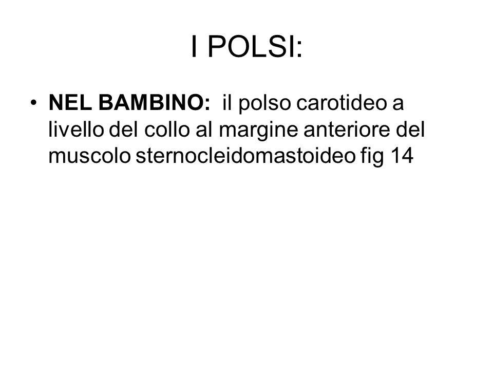 I POLSI: NEL BAMBINO: il polso carotideo a livello del collo al margine anteriore del muscolo sternocleidomastoideo fig 14.