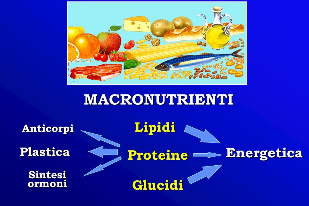 MACRONUTRIENTI Lipidi Energetica Proteine Glucidi Plastica Anticorpi