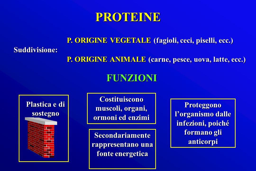 PROTEINE FUNZIONI P. ORIGINE VEGETALE (fagioli, ceci, piselli, ecc.)
