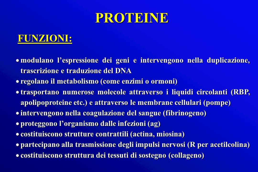 PROTEINEFUNZIONI: modulano l'espressione dei geni e intervengono nella duplicazione, trascrizione e traduzione del DNA.