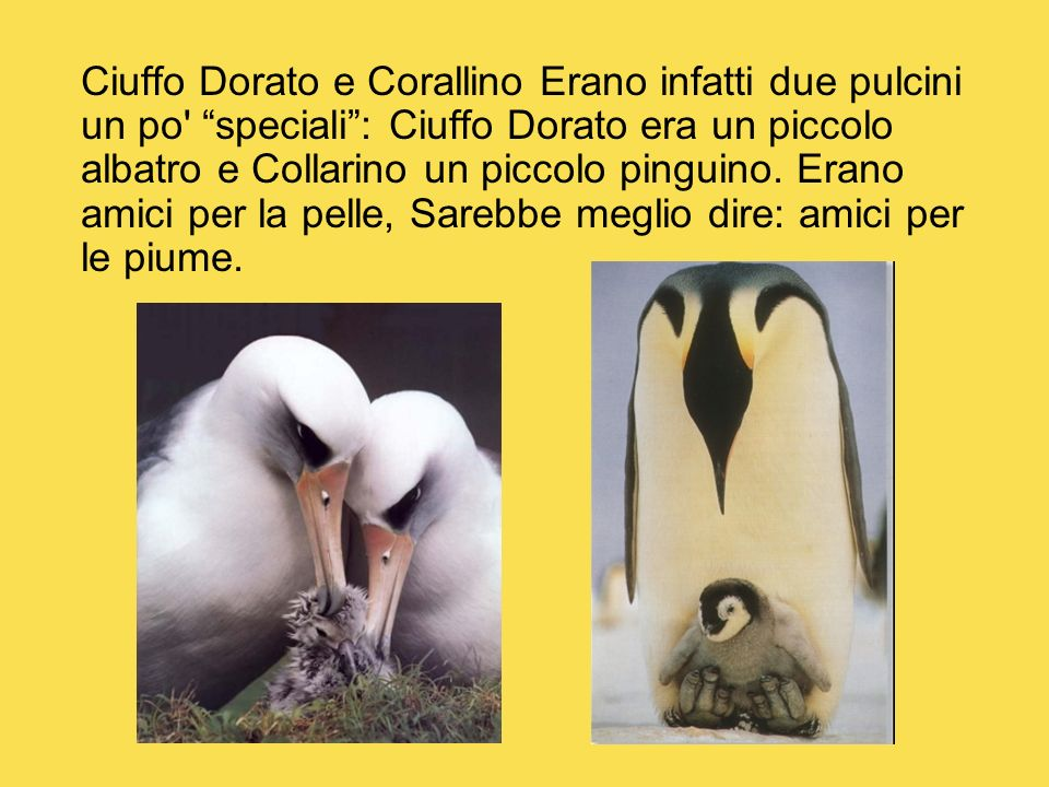 Ciuffo Dorato e Corallino Erano infatti due pulcini un po speciali : Ciuffo Dorato era un piccolo albatro e Collarino un piccolo pinguino.