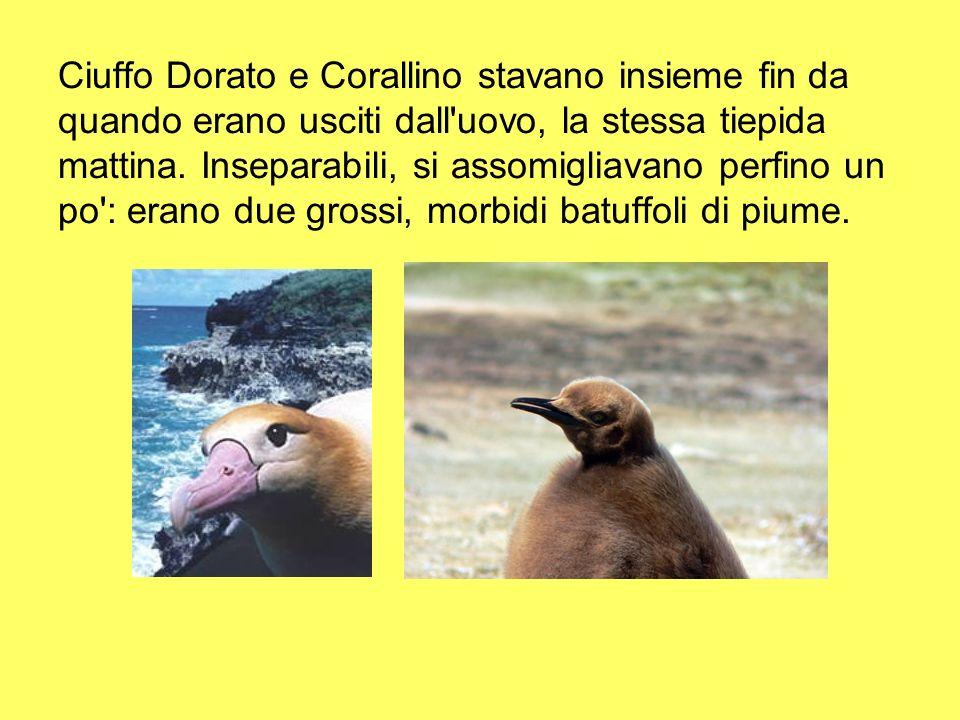 Ciuffo Dorato e Corallino stavano insieme fin da quando erano usciti dall uovo, la stessa tiepida mattina.