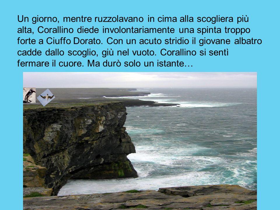 Un giorno, mentre ruzzolavano in cima alla scogliera più alta, Corallino diede involontariamente una spinta troppo forte a Ciuffo Dorato.