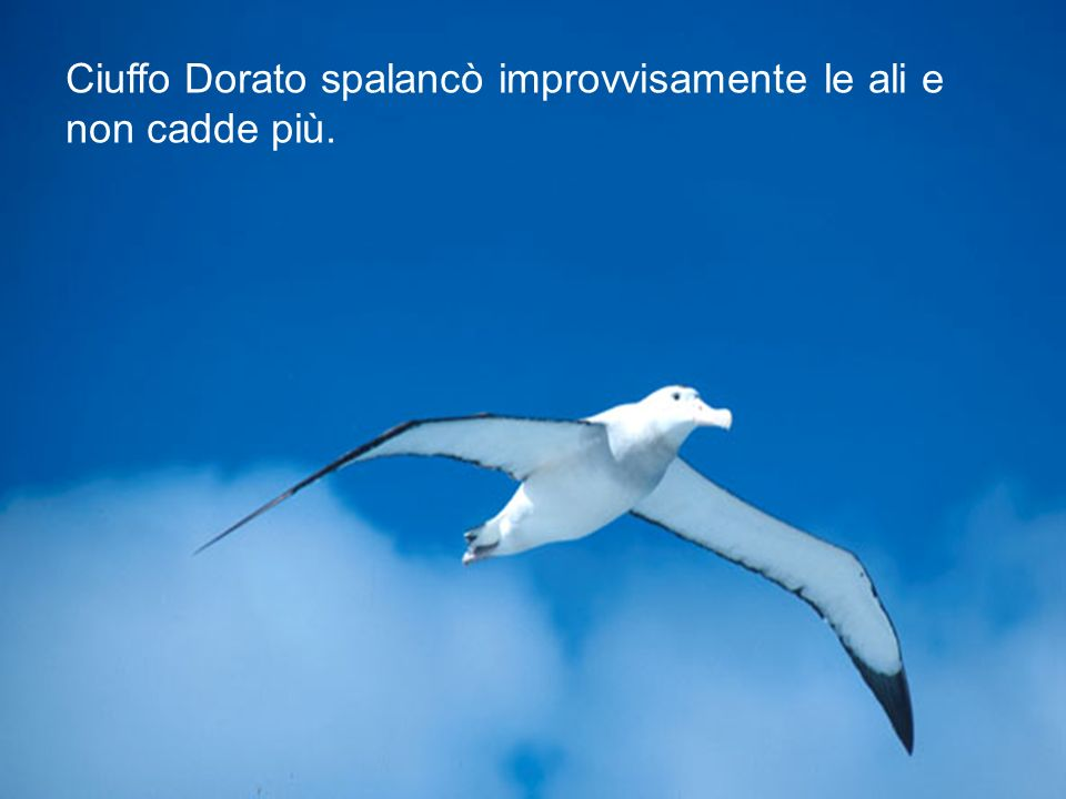 Ciuffo Dorato spalancò improvvisamente le ali e non cadde più.