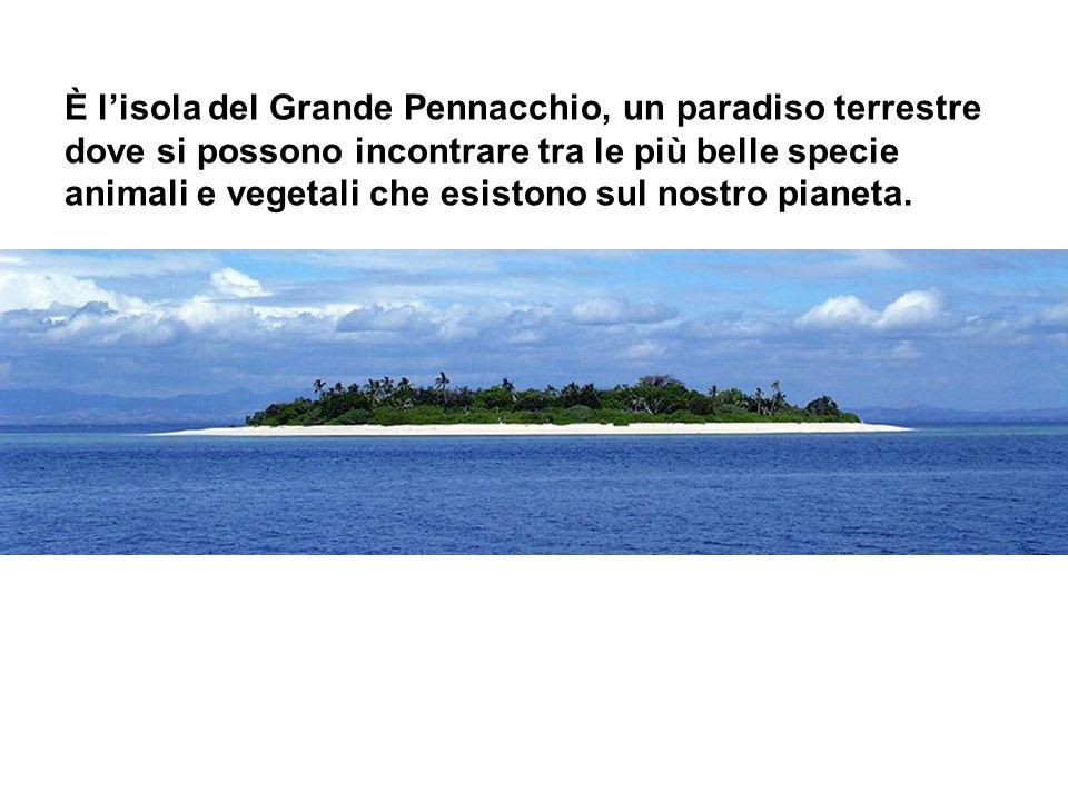 È l'isola del Grande Pennacchio, un paradiso terrestre dove si possono incontrare tra le più belle specie animali e vegetali che esistono sul nostro pianeta.