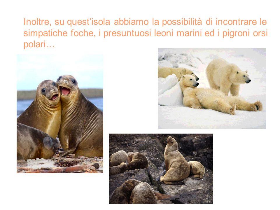 Inoltre, su quest'isola abbiamo la possibilità di incontrare le simpatiche foche, i presuntuosi leoni marini ed i pigroni orsi polari…