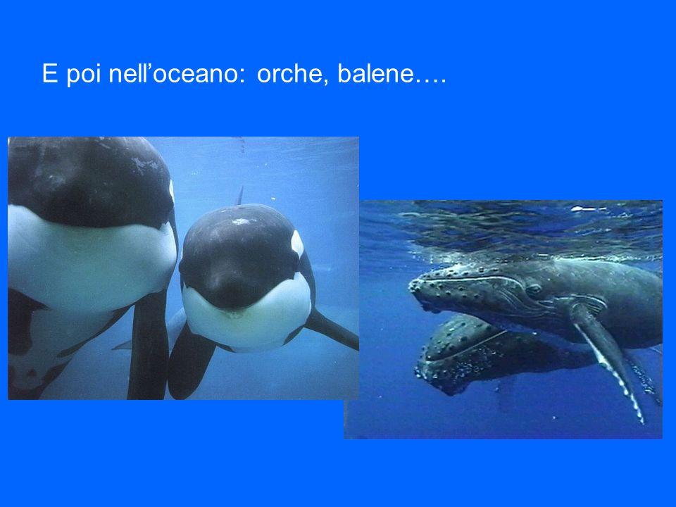 E poi nell'oceano: orche, balene….