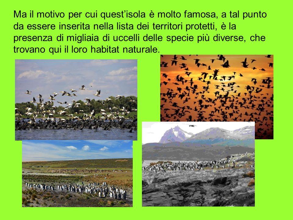 Ma il motivo per cui quest'isola è molto famosa, a tal punto da essere inserita nella lista dei territori protetti, è la presenza di migliaia di uccelli delle specie più diverse, che trovano qui il loro habitat naturale.