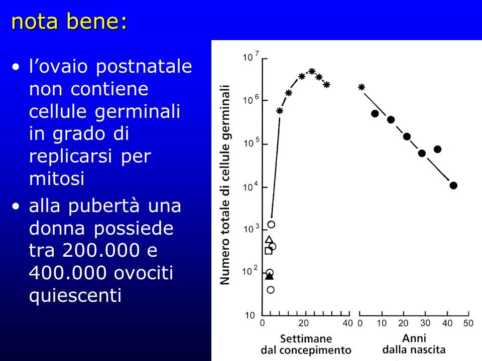 nota bene: l'ovaio postnatale non contiene cellule germinali in grado di replicarsi per mitosi.