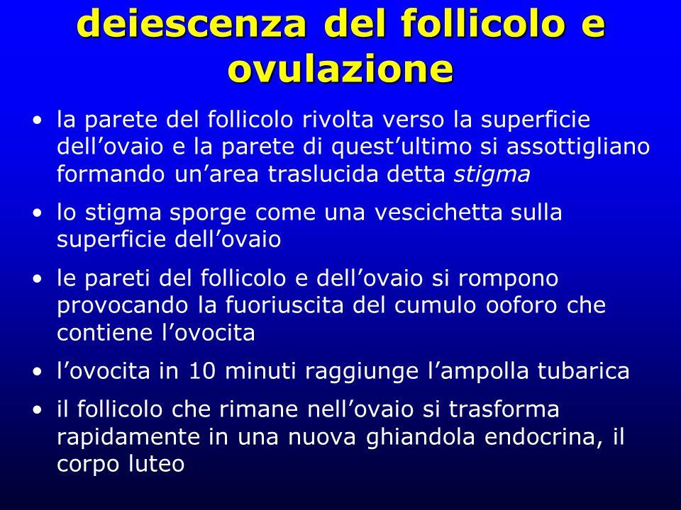 deiescenza del follicolo e ovulazione