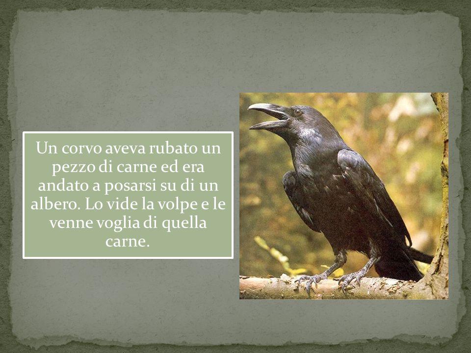 Un corvo aveva rubato un pezzo di carne ed era andato a posarsi su di un albero.