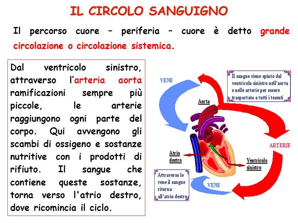IL CIRCOLO SANGUIGNO Il percorso cuore – periferia – cuore è detto grande circolazione o circolazione sistemica.