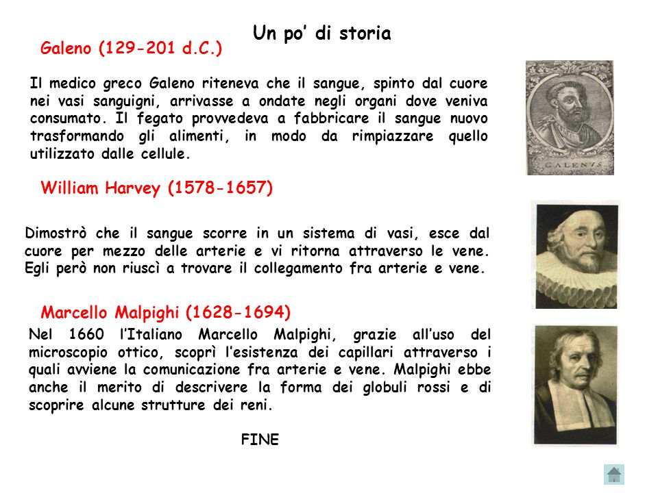 Un po' di storia Galeno (129-201 d.C.) William Harvey (1578-1657)
