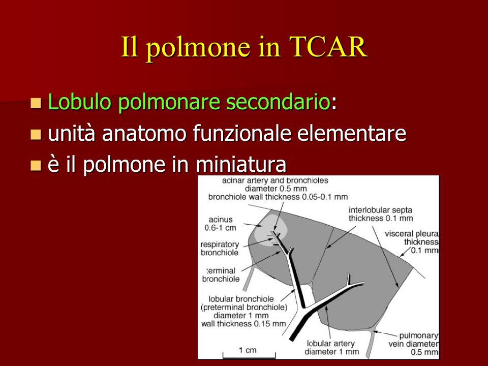 Il polmone in TCAR Lobulo polmonare secondario: