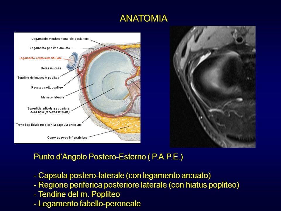 ANATOMIA Punto d'Angolo Postero-Esterno ( P.A.P.E.)