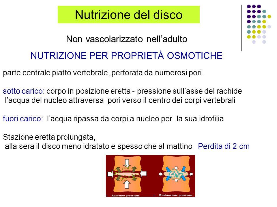 Nutrizione del disco Non vascolarizzato nell'adulto
