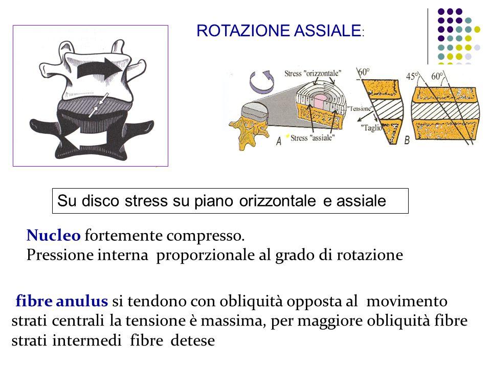 ROTAZIONE ASSIALE: Su disco stress su piano orizzontale e assiale. Nucleo fortemente compresso.